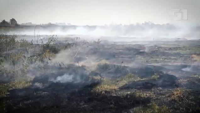 남미 판타나우 생태계 위기…작년 불로 동물 1천700만마리 죽어