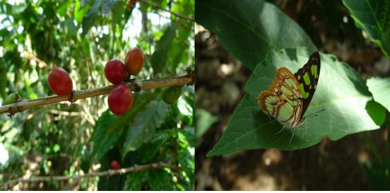 중미의 화원, 코스타리카의 자연조건